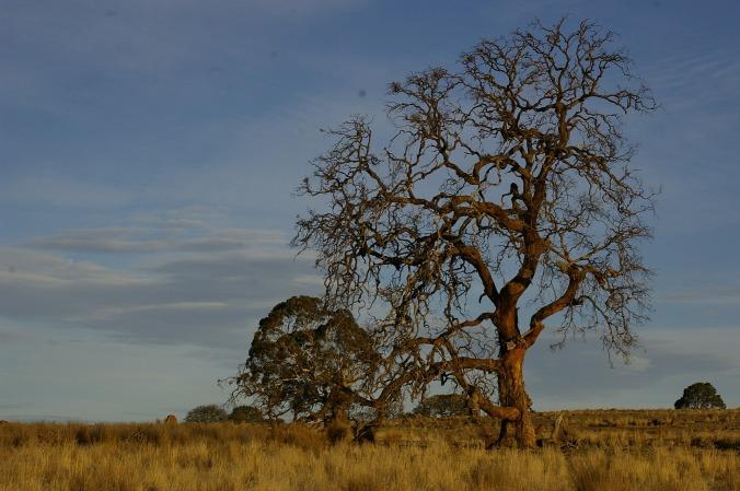 tree-517412_1920