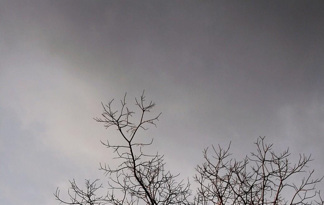 bare-branches-463542_1920 (3)