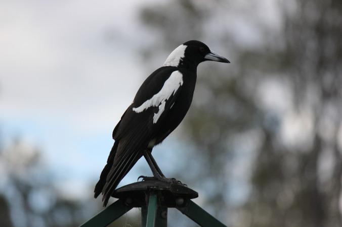 bird-2734600_1920